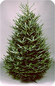 Types Of Christmas Trees.Types Of Christmas Trees Available To Cut At Christmas Tree